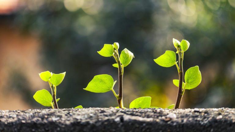 persoonlijke ontwikkeling en groei
